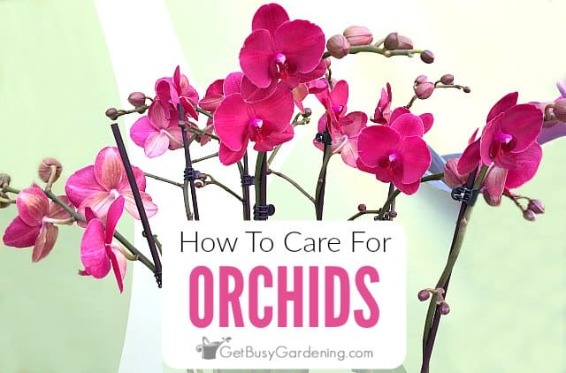 How To Care For An Orchid Plant