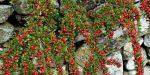 Кустарники россии фото и название – Дикорастущие кустарники: виды растений
