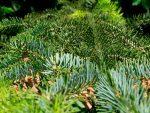 Какие деревья относятся к хвойным – Хвойные деревья – виды хвойных растений с названиями, фото и описанием