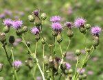 Сорная трава на огороде фото и названия – Гид по сорнякам: фото, виды, названия, меры борьбы
